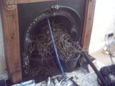 vogelnest in schoorsteen